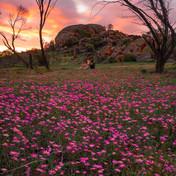 WA Wildflower Country