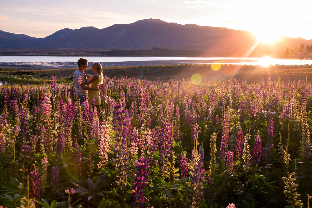 couple in lupins at lake tekapo as the sun rises