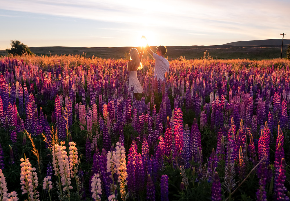 Couple in lupins at Lake Tekapo during sunset