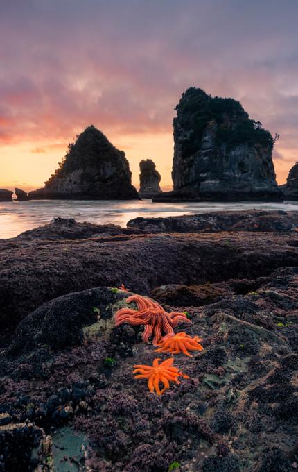 Motukiekie Beach Starfish