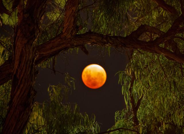 Perth Blood Moon