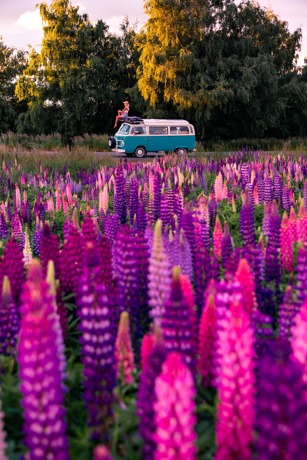 girl sits on kombi with lupins in foreground at lake tekapo field