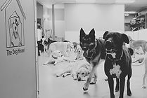 The Dog House Daycare prices