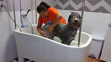 The Dog House Grooming