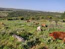Celebrating Shabbat-Iftar—With the Druze Community