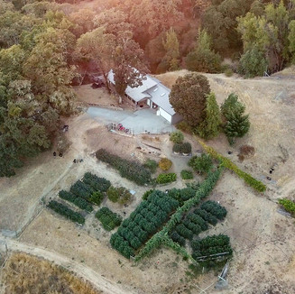 Cannabis Farm Aerial Photography