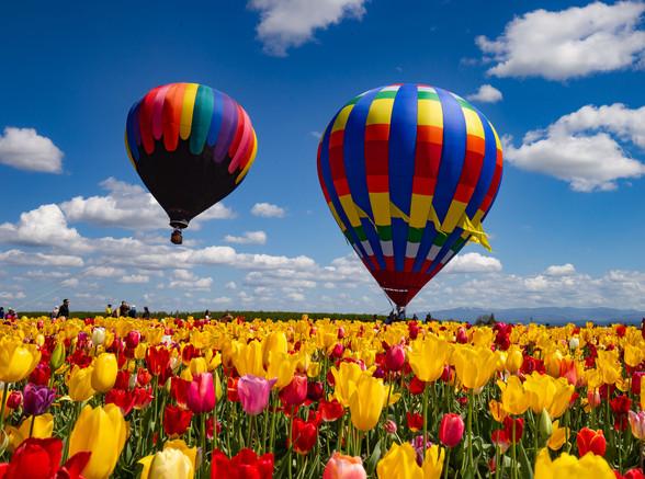Tulip Festival - Oregon