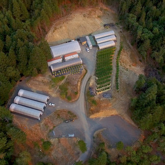 Cannabis Farm Aerial