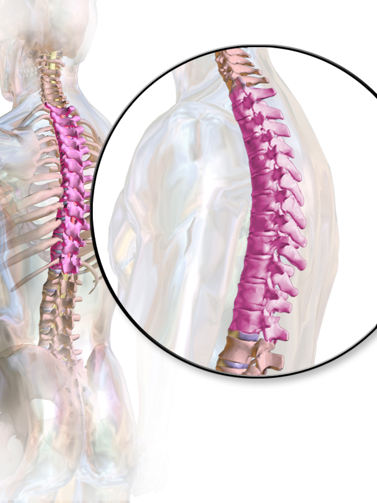 Orthopedic PT for thoracic spine and rib pain