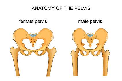 pelvic dysfunction