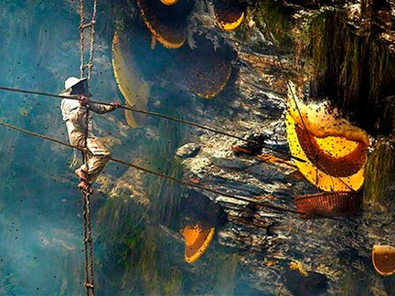 The Gift of Honey:  Our most Ancient & Traditional Holiday Gift