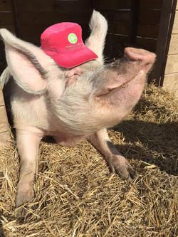 Heartland Hat - Pig