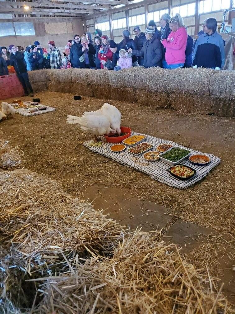 Thanksgiving For The Turkeys 2019