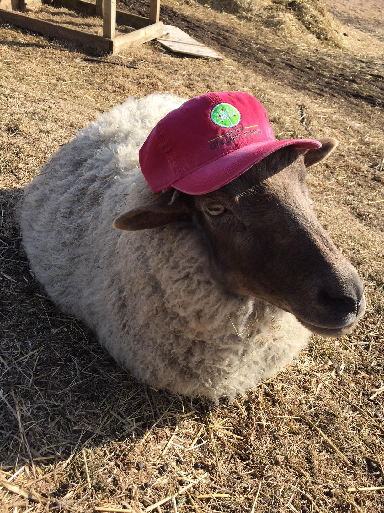 Heartland Hat Sheep
