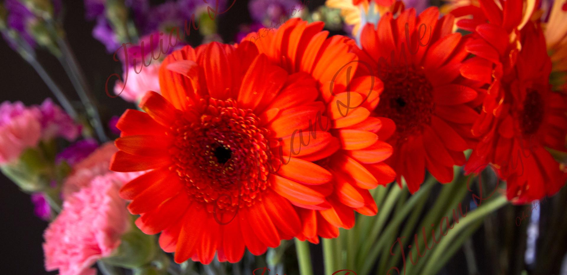 Flowers 9388 (c) JDoyle.jpg
