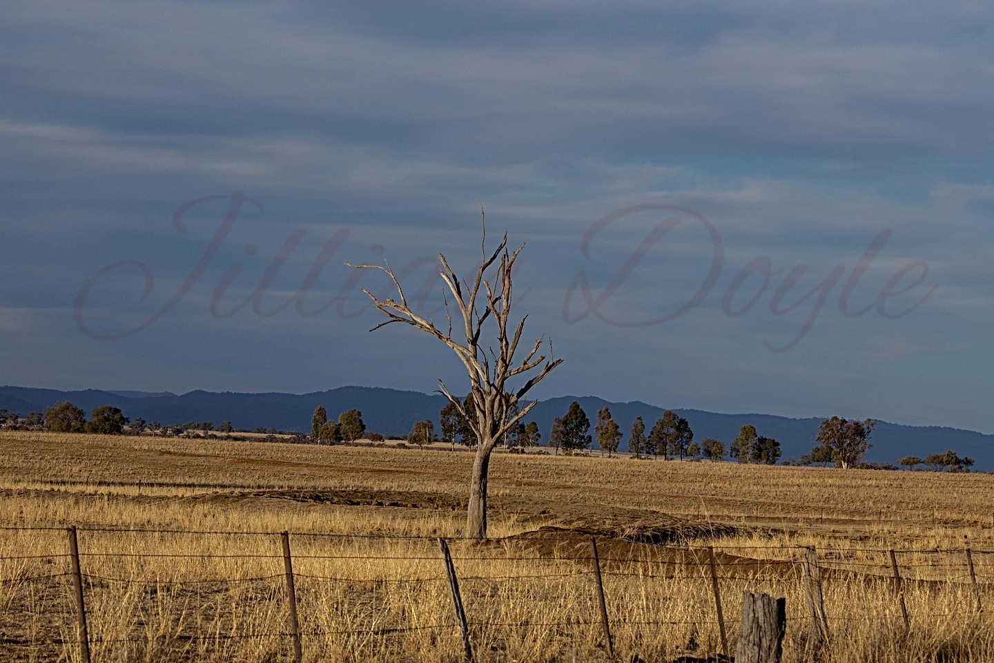 Drought NSW