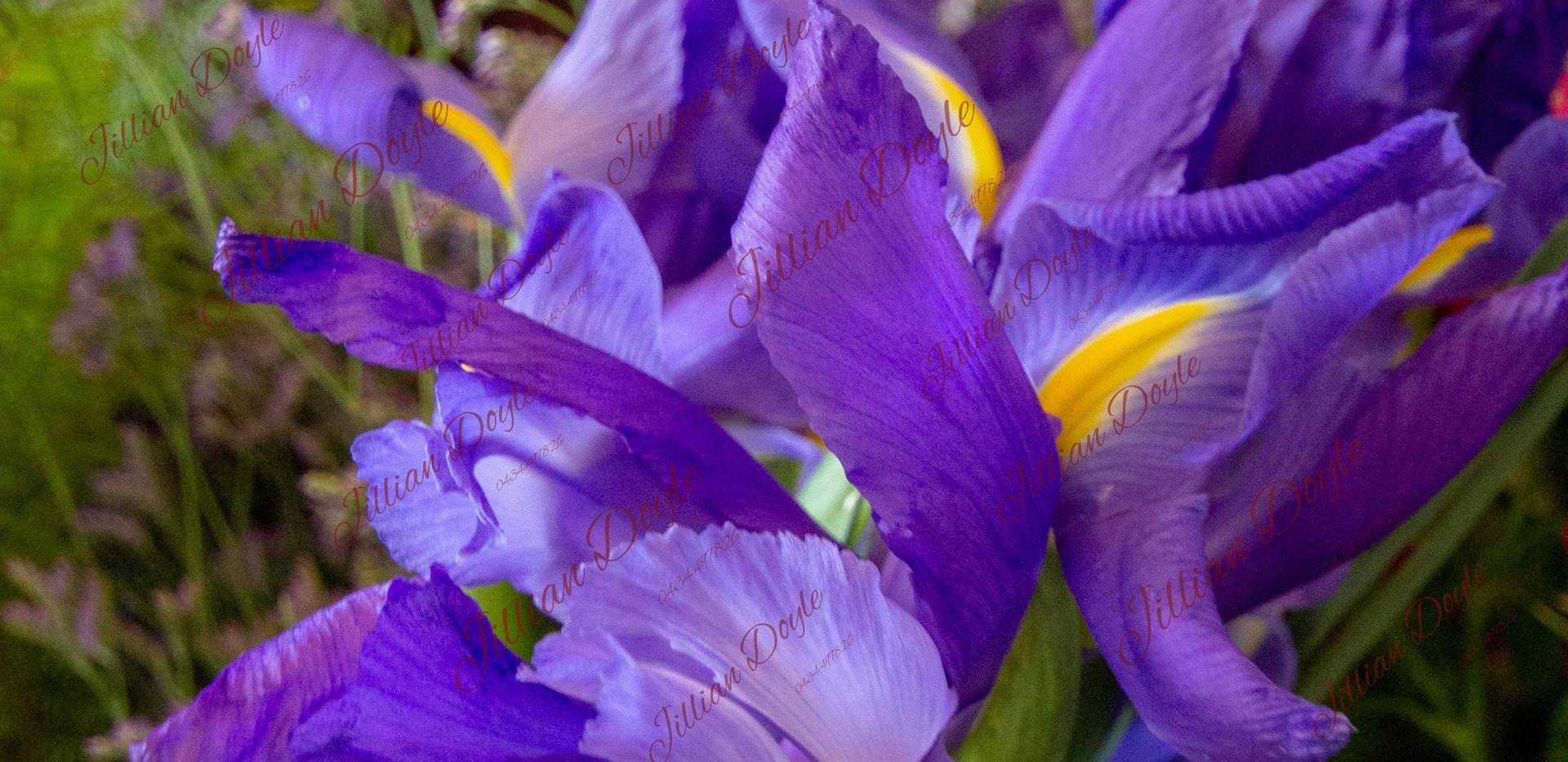 Flowers_9401 (c) JDoyle.jpg