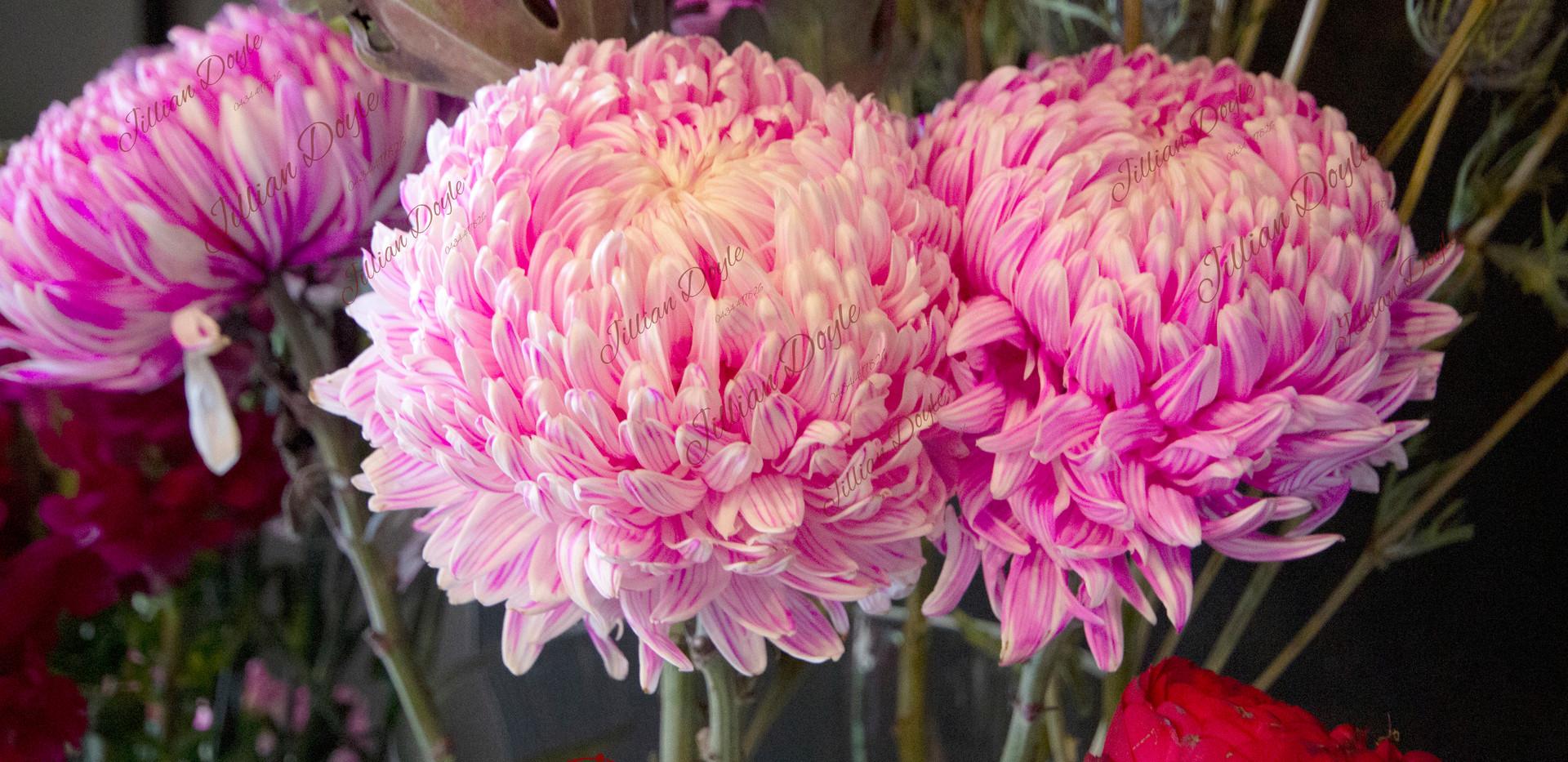 Flowers_9392 (c) JDoyle.jpg