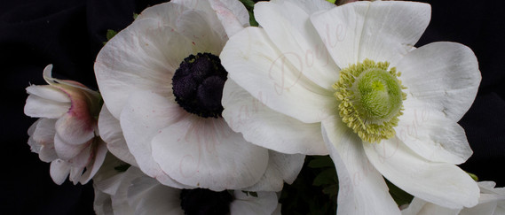 Flowers 8535 (c) JDoyle.jpg