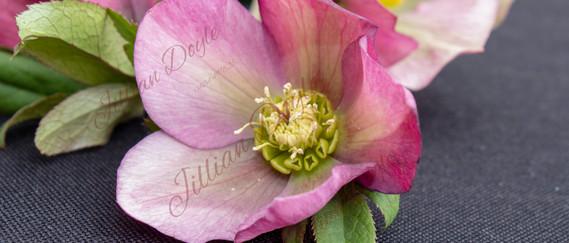 Flowers 8502 (c) JDoyle.jpg