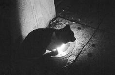 Cat in Rabat.jpg