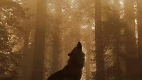Heart Howl