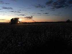 Cotton Picker Demo