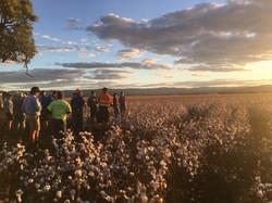 Dryland Cotton Field Day