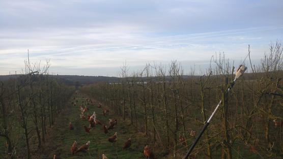 Brambletye Fruit Farm Pears