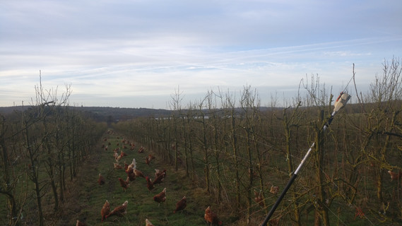 Brambletye Fruit Farm Pears