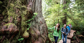 Seven things to do this summer on Vancouver Island