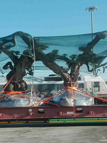 transporte ARBOLES
