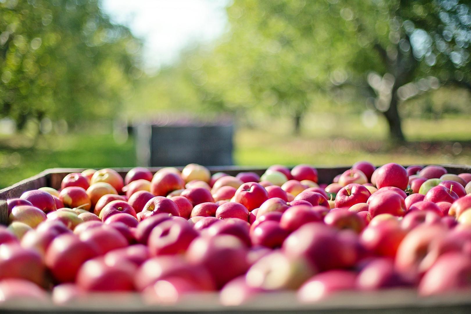 apples transportation