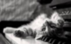 199-1995645_monochrome-animals-piano-kit