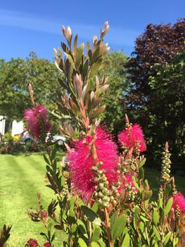 Tresowes Green Cottage's garden