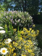 Tresowes Green Cottage's gardens