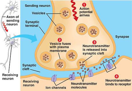 synaptic2.jpg