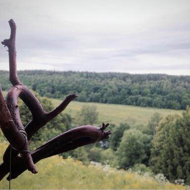 Bugs & woods