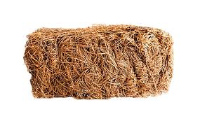 pine starw.png