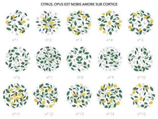CITRUS, OPUS EST NOBIS AMORE SUB CORTICE