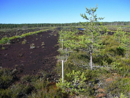 Why we must protect Peatlands