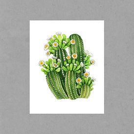 desert botanicals.jpg