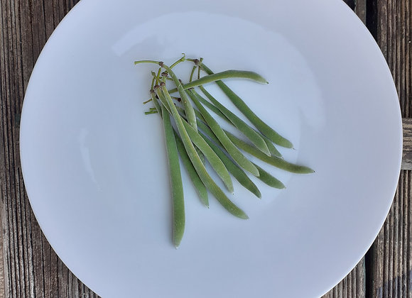 assiette FEUILLE
