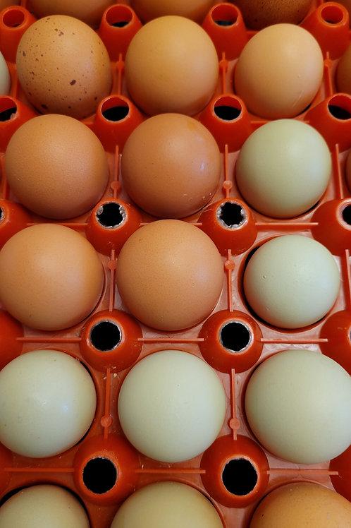 Medium Organic Pasture Raised Eggs