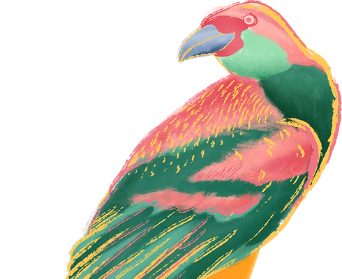 Colorful%20Bird_edited.png