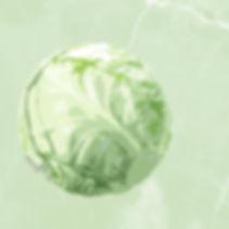 Acabbage.jpg