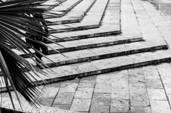 steps & palm tree