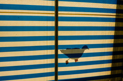 seagul & lines