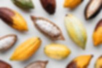 Cocoa pods on a white background, creati