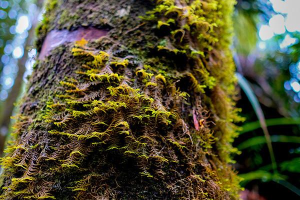 Trunk Ferns